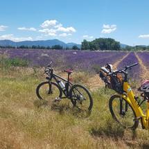 Vélo électrique Lavande plateau de Valensole