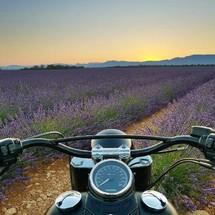 Lever de soleil sur les lavandes de Provence