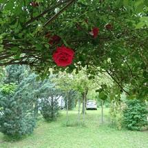 camping rose de provnece à Riez