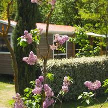 Mobile home rental