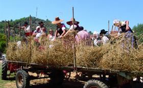 Wheat festival